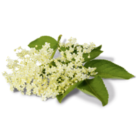 Elderflower Alpendrink Organic syrup 1:6